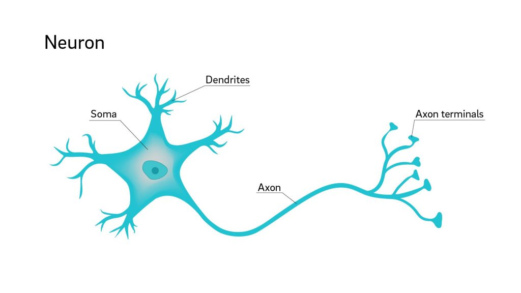 This image has an empty alt attribute; its file name is 2-whyareneuron-1024x576.jpg
